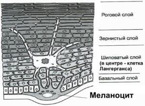dermalidht-311-melanocit